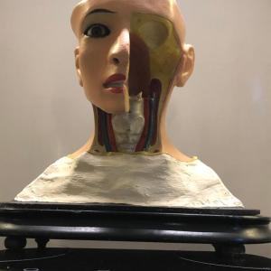 - Antico modello medico anatomico di testa umana con sezione di cervello, firmata PARAVIA