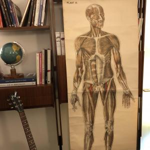 Grande poster corpo umano, dimensioni reali, primi anni del '900, Germania